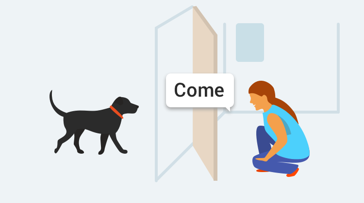 Learn how to train your dog to Come with GoodPup.
